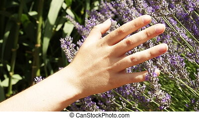 Hand of a woman touching a lavender