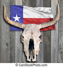 Texas Cow Skull. - Texas cow skull on old wooden background.