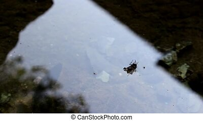 This fly is upside down - This fly was in a bad situation,...