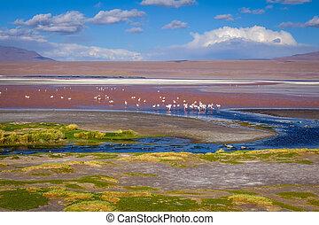 Laguna colorada in sud Lipez Altiplano reserva, Bolivia -...
