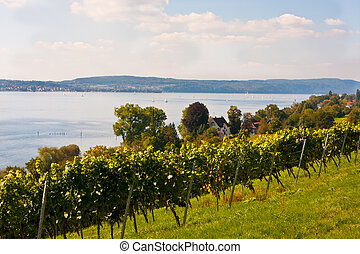 Lake Constance, Germany - Lake Constance in the near of...
