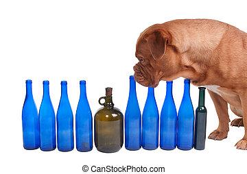a, cão, vinho, garrafas