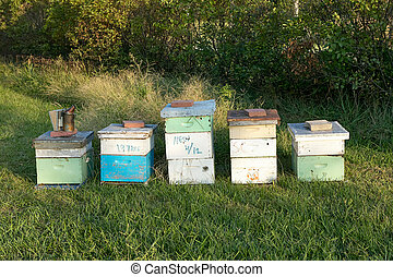 Wooden bee farming boxes and bee-keeping equipment - Honey...