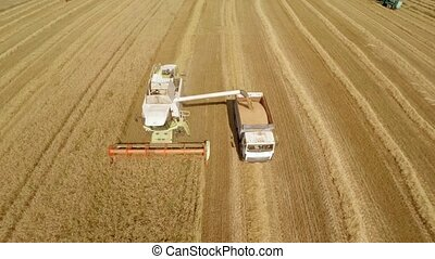 Agricultural machines in the fields. The work of technology...