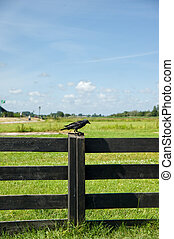 Bird on wooden fence of Amsterdam,netherland