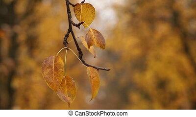 Botanical garden - Close-up shot of vibrant yellow autumn...