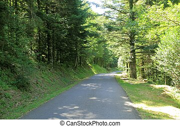 Pyrenees trees forest mountain summer scenics - Pyrenees...