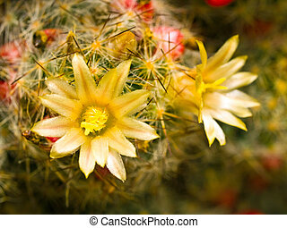 Cactus Flower Macro with Vivid Texture and Color; Great for...