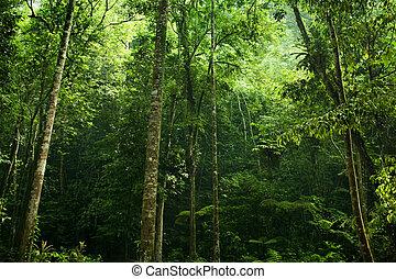 bosque, luz del sol