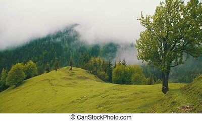 Landscape of Mountain Hills, Mountain Pasture for Cows in...