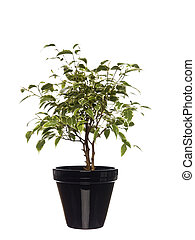 Potted plant towards white background