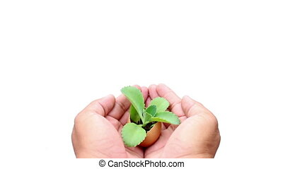 Hand holding plant on isolated