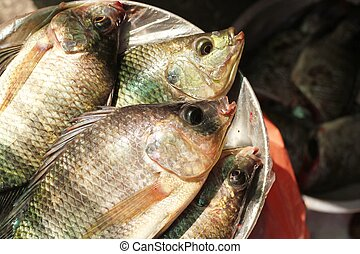 raw nile tilapia fish in sunlight