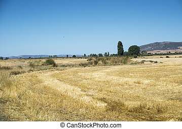 Stubble fields in an agricultural landscape in Ciudad Real...
