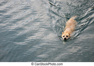 A dog swimming in the river