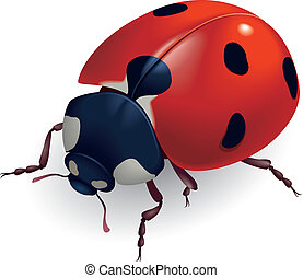 Ladybug Lat Coccinellidae Vector illustration