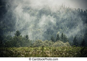 Foggy Hills Landscape. Soggy Weather in the Remote Place.