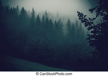 Foggy Forest Hills Landscape. Soggy Weather Scenery with...