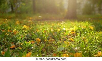 Autumn garden leaves