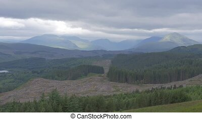 Highlands, Scottish Forest - Ungraded Version - Ungraded and...
