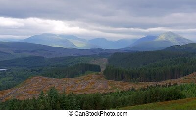 Highlands, Scottish Forest - Graded Version - Graded and...