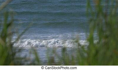Castletown Beach Through Weed, Scotland - Native Version -...