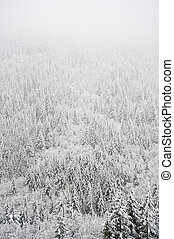 Winter forest - Forest covered with snow in a blizzard