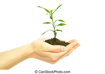 plant in hands - plant in female hands on white background...