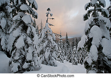 Sunset clouds above a winter forest - Sunset clouds above a...