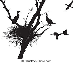 Cormorant nest - illustration cormorants nest in the dry...