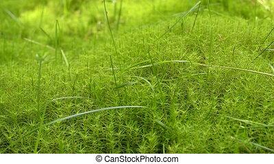 green moss background texture - Moss Background Texture....