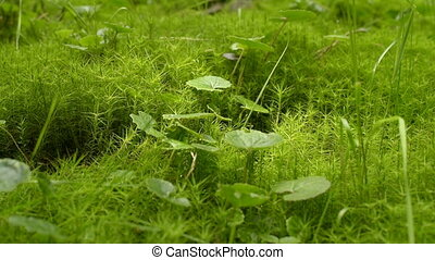 green moss background texture - Moss Background Texture....
