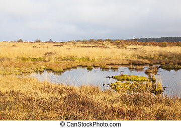 Swamp Landscape, Eifel - The Brackvenn in the High Fens...