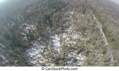 Aerial scene of mixed forest with birches and spruce trees...