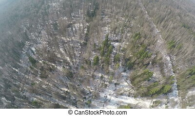 Mixed forest with birches and conifers in winter, aerial...
