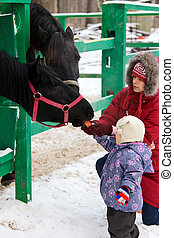 Horse feeding - Young woman with a little girl feeding a...