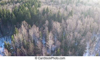 Coniferous trees and birches in winter mixed forest, aerial...