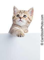 Cat kitten hanging over blank posterboard for message -...