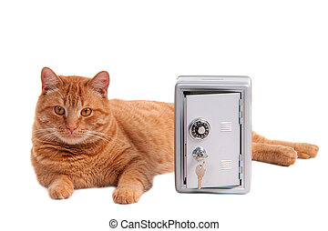 Guard cat - Cat is lying next to a deposit safe
