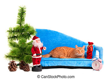 Cat on a sofa - Attentive cat is waiting for Christmas on...