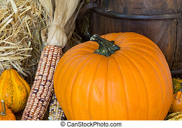 Colorful Autumn Pumpkins, Gourds and Corn - Colorful...