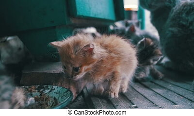 Little Red Stray Kitten Looks into the Camera. Slow Motion -...
