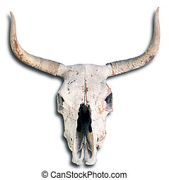 Old Cow Skull. - Old cow skull on white background.
