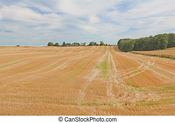 soy field - panoramic photo of croped soy field
