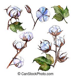 Wildflower cotton flower in a watercolor style isolated....