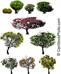 trees - bushes trees vector