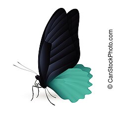 Beautiful butterfly isolated on a white background....