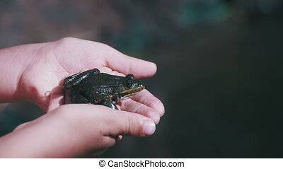 Green Frog Sitting in the Children's Hands. Slow Motion in...