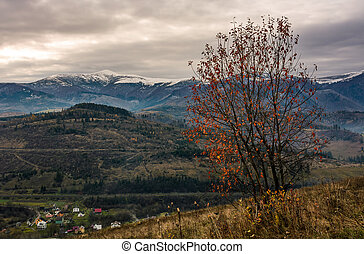 tree with red foliage on hillside in late autumn. hills with...