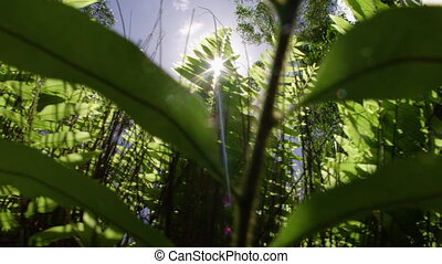 Shot beneath tall plants with lens flare - A sliding shot to...